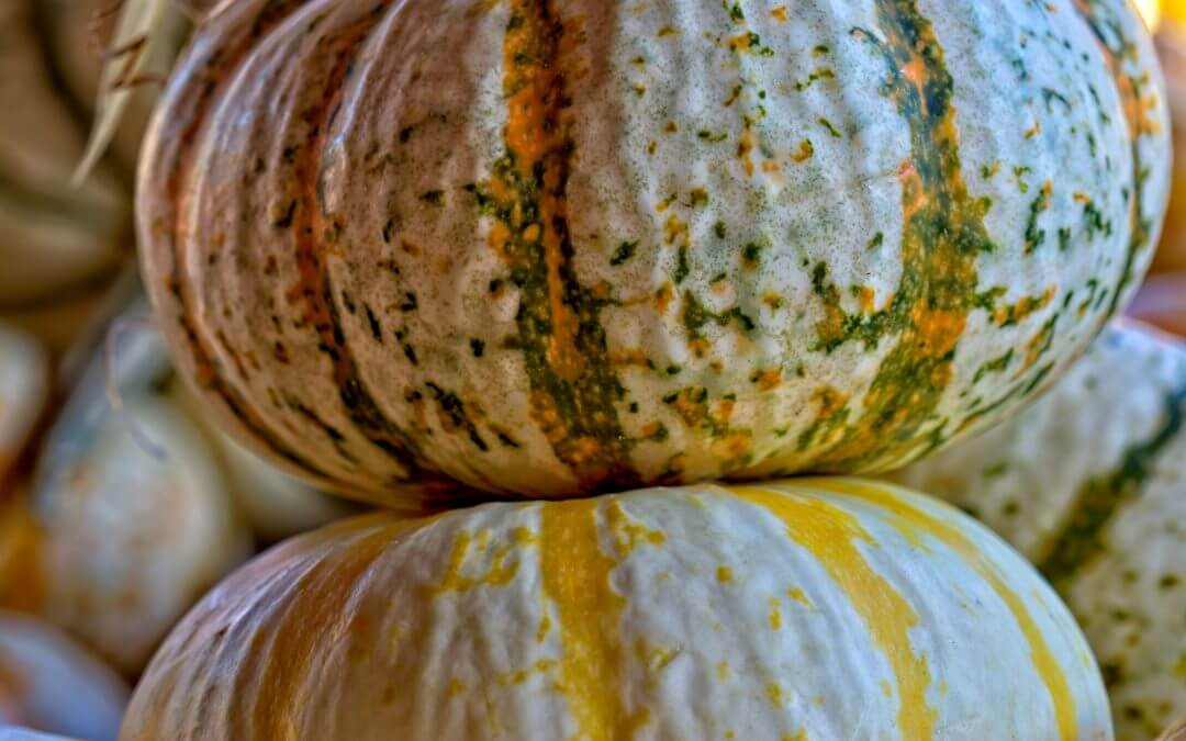 close-up photography of pumpkins